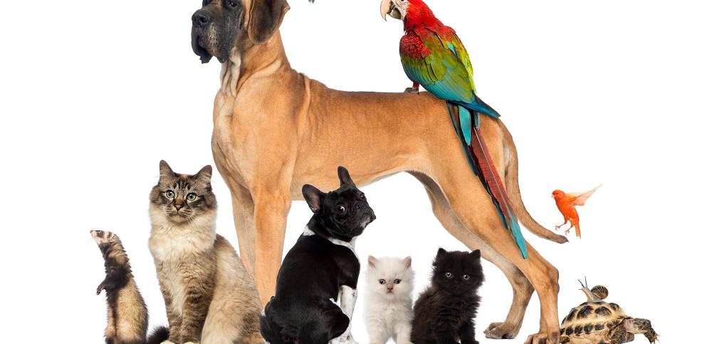 servicios-mascotas
